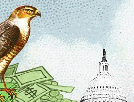 deficit chicken hawk